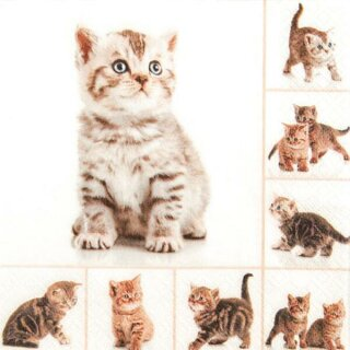 Serviette - Meow