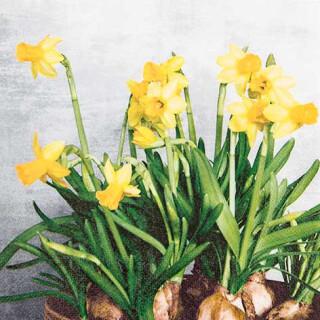 Serviette - Narcissus