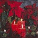 Serviette - Candlelight Poinsettia
