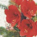 Serviette - Red Amaryllis